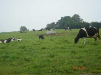 farm_5-1